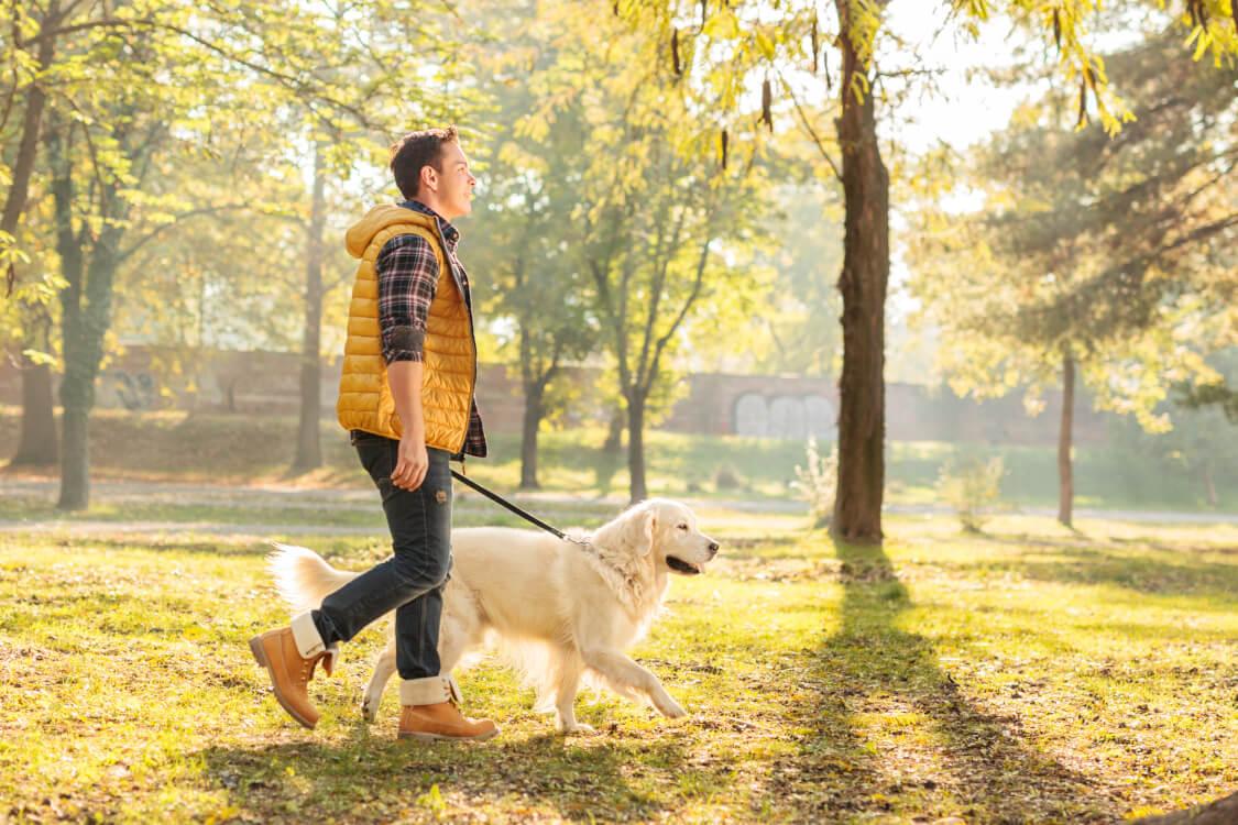 歩きの得意な犬も失敗する