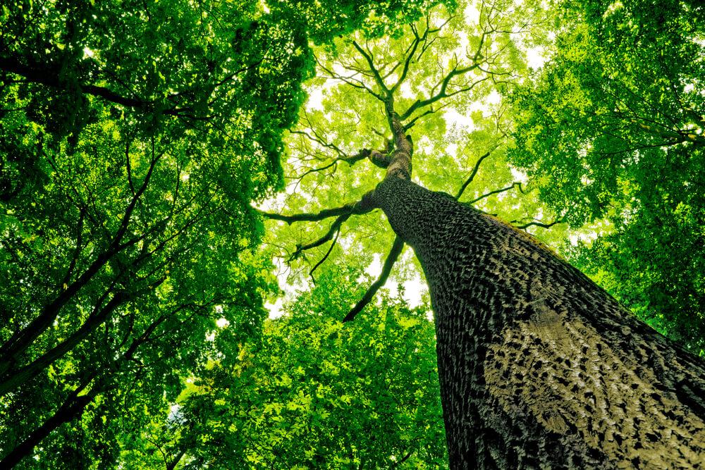 木ばかり見ていて森全体が見えなくなってしまっていた