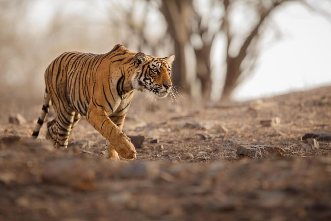虎視眈々と獲物を狙う