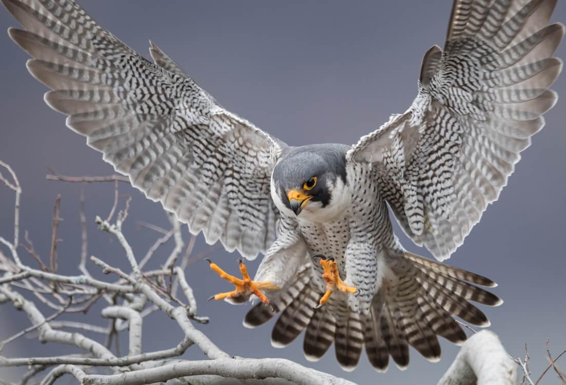 能ある鷹は爪を隠して獲物を捕る