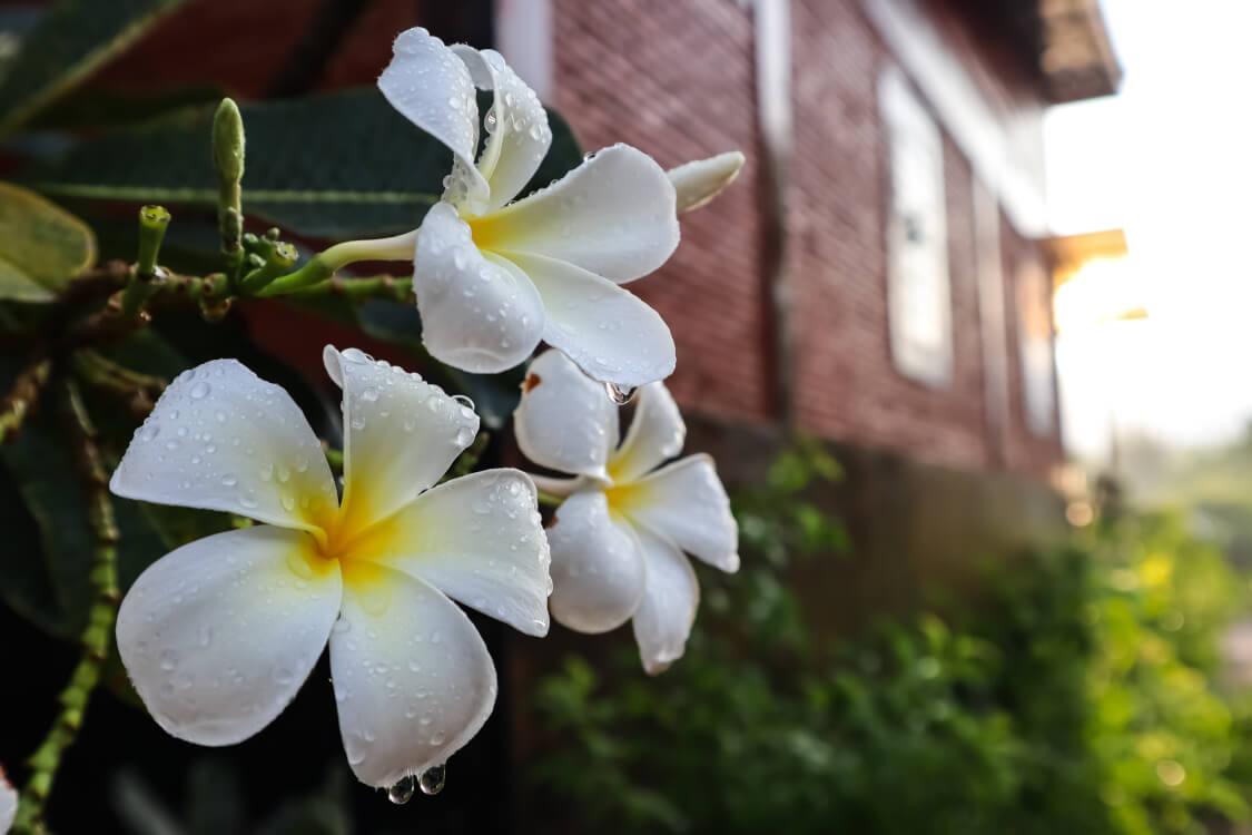 良い花は後から咲く