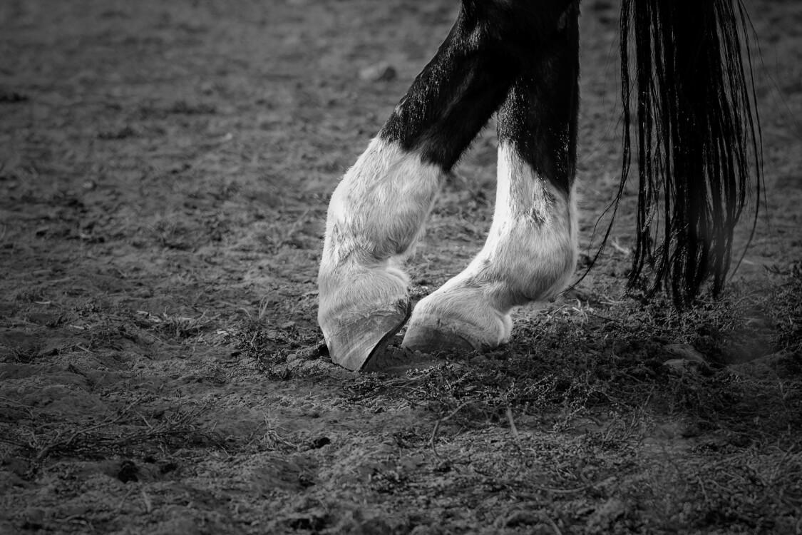 馬脚を現すとは隠しておいたことが明らかになることを言う
