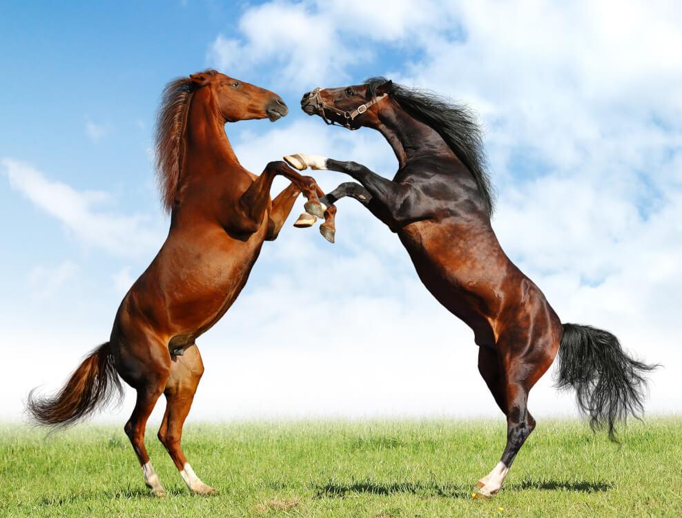 馬が合わない二頭の馬