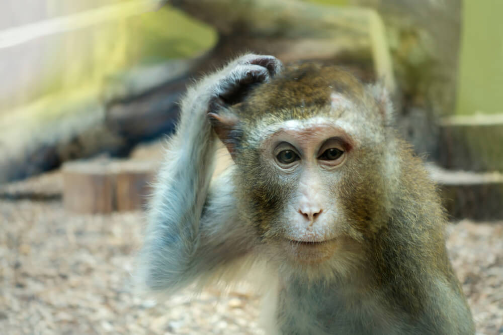木から落ちた猿