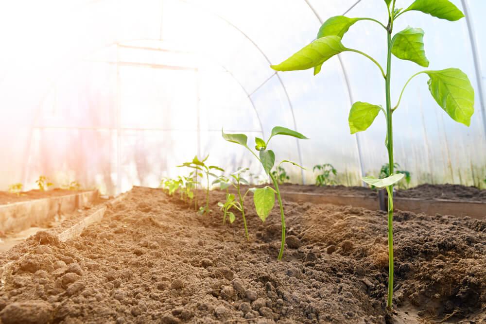 温床で育つ植物