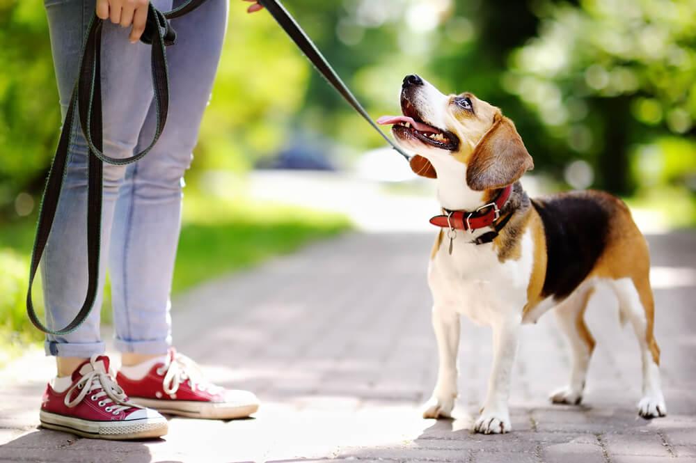 飼い主に忠実な犬