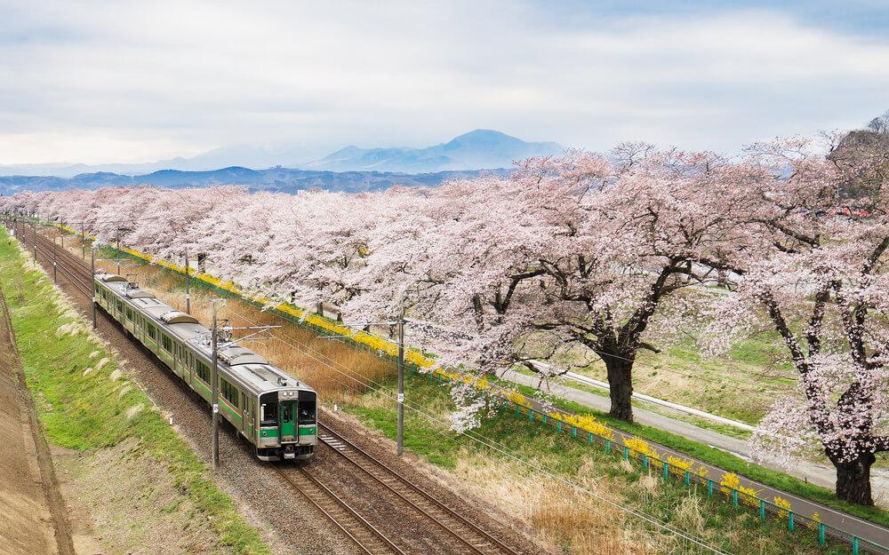 豊かな自然と桜と鈍行列車