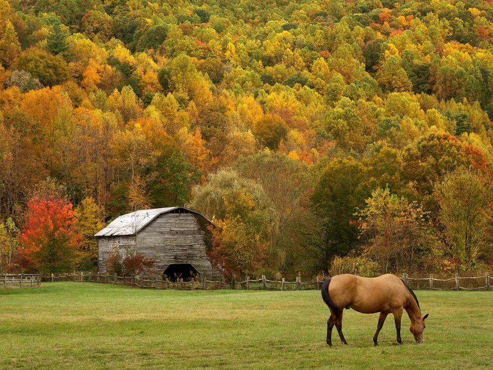 天高く馬肥ゆる秋がくる