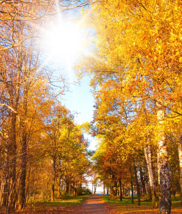 秋霜烈日の気候