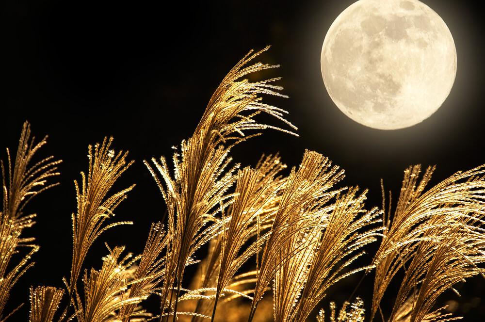 中秋の名月は月見をする日だ