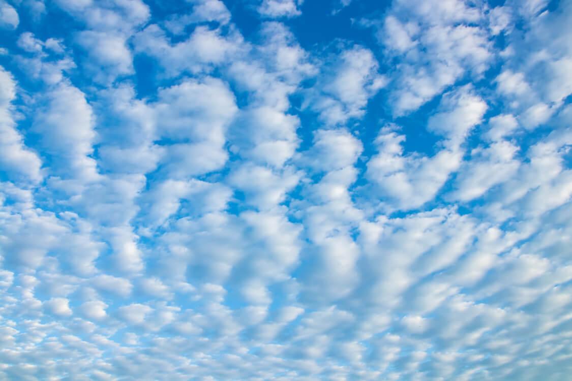 今日の空はいわし雲が浮かんでいる