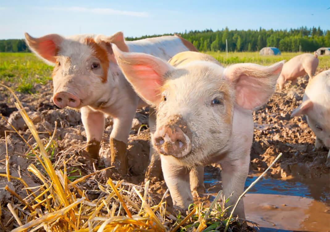 家畜は飼育員による生殺与奪が可能だ