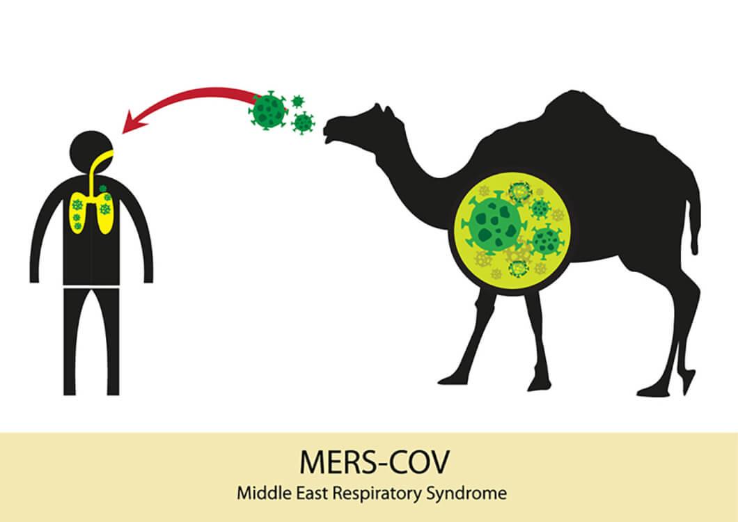 MERSの感染経路はラクダだ