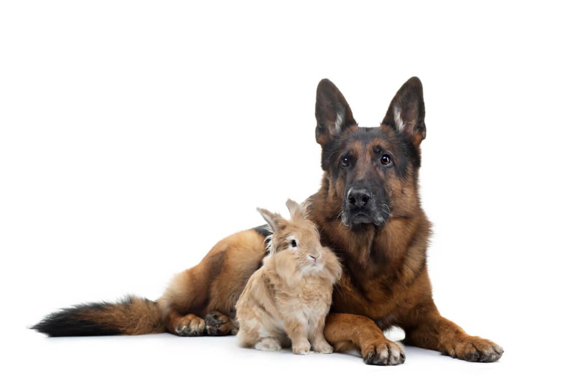 犬と兎の争い