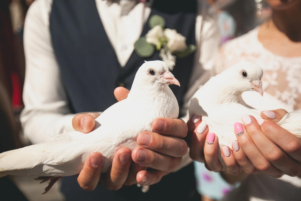 比翼連理な夫婦