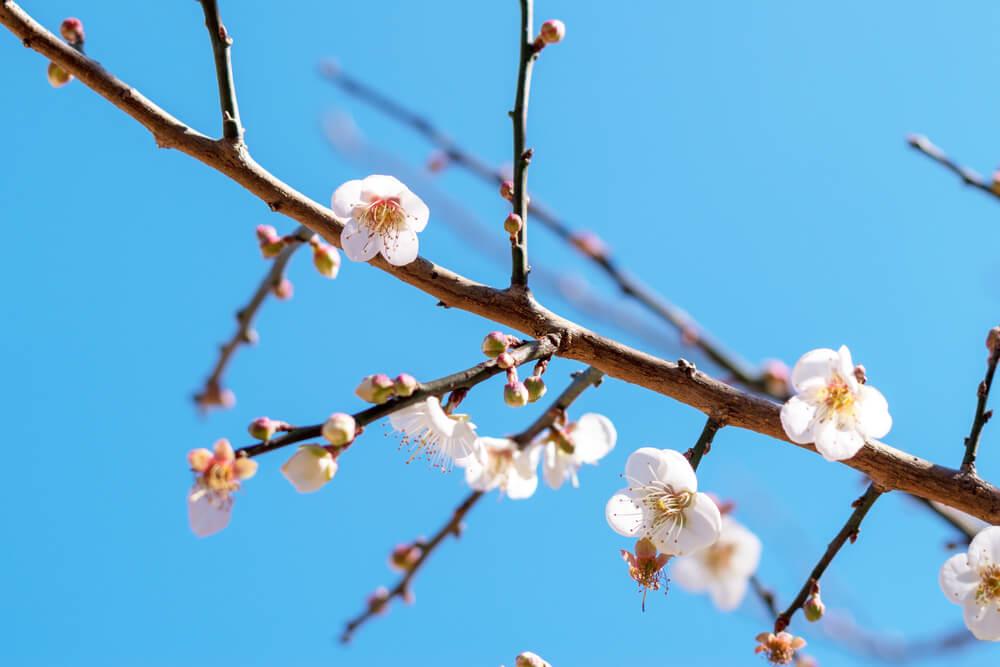 春分の日」の使い方や意味、例文や類義語を徹底解説!   「言葉の手帳 ...