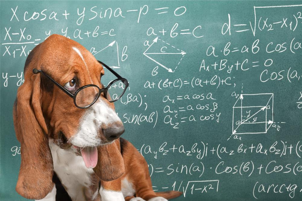 数学の問題を解く聡明な犬