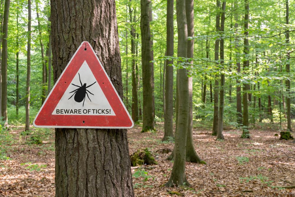 夏の森はマダニ感染症に注意する