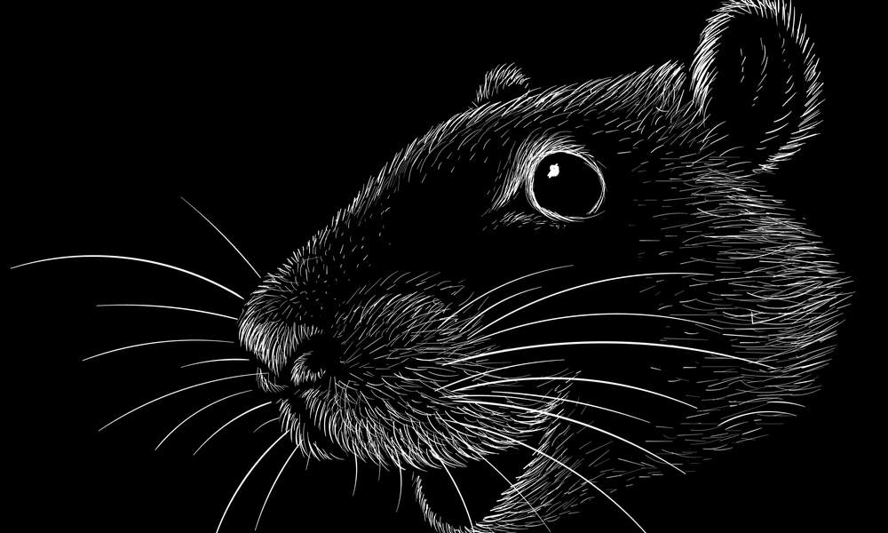 頭の黒い鼠を意味する恐い鼠だ