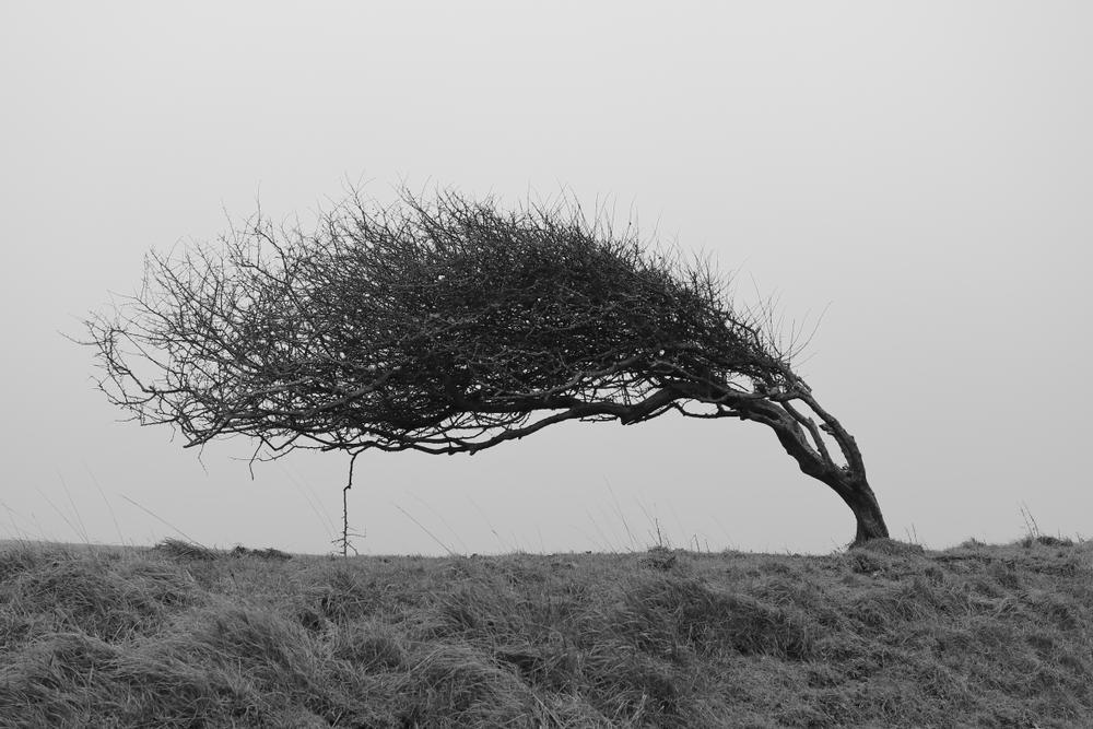 柳に風で倒れない生命力の強い樹