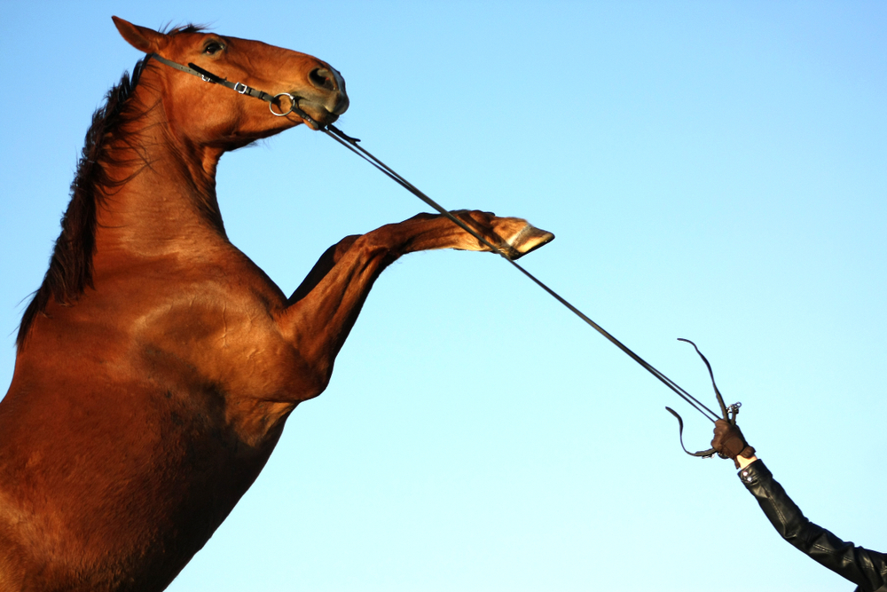 荒馬の轡は前からの諺通り、困難には正面からぶつかる事だ
