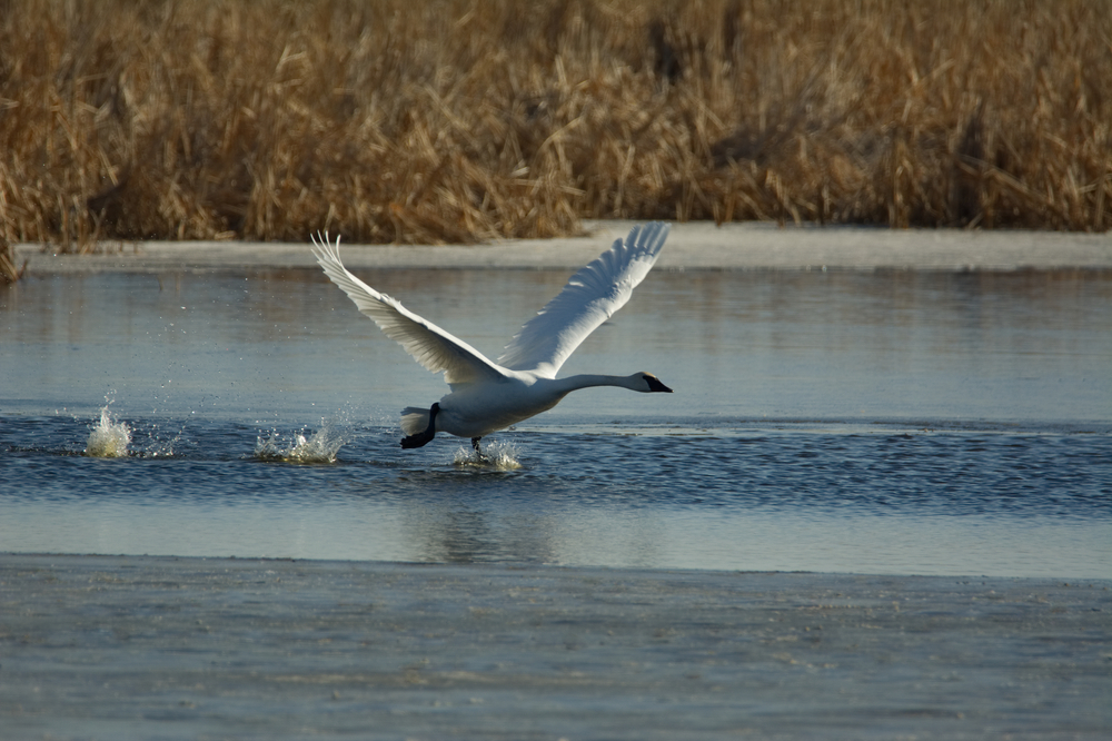 足下から鳥が立つ瞬間を目撃する