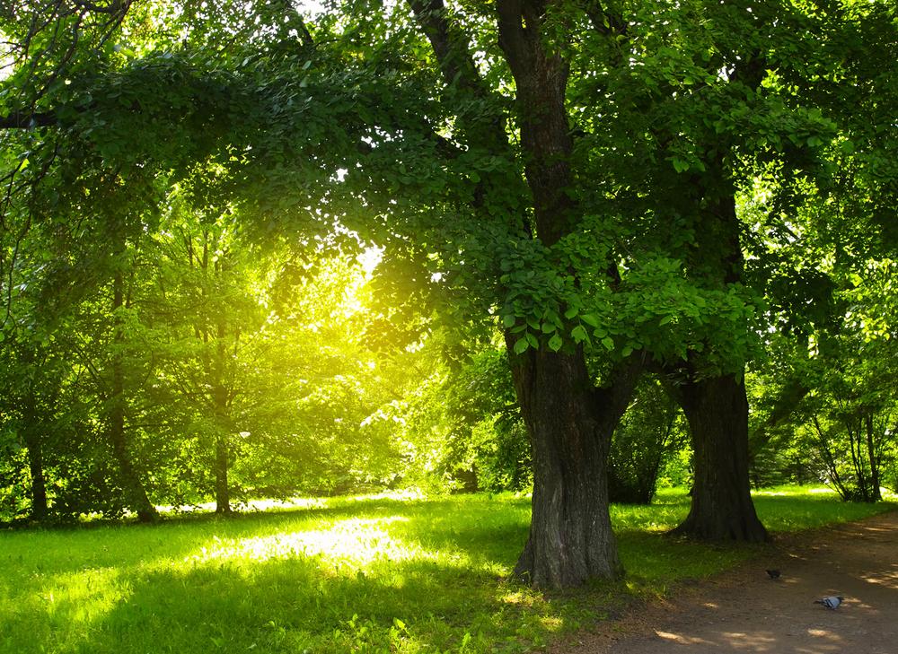 公園で夏木立の景色に季節を感じる