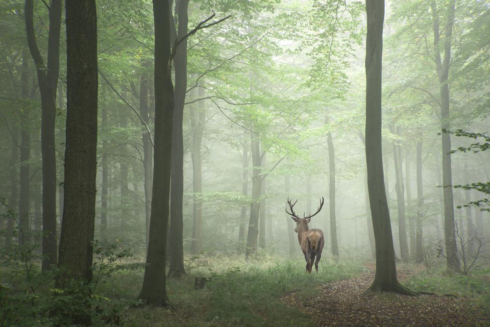 鹿を追う者は山を見ずの通り、鹿のみを見て周りが見えていない様子。